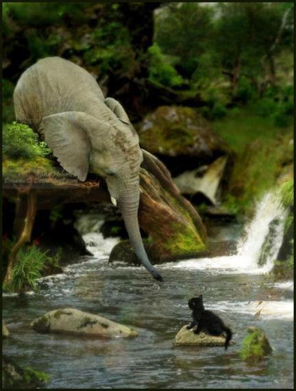 De olifant met een poes