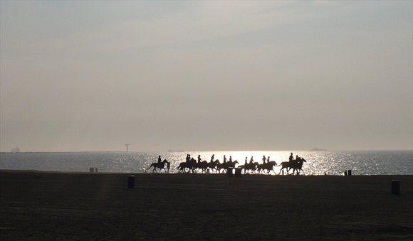 strand paarden