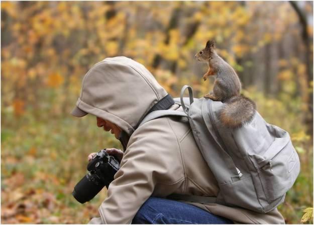 Eekhoorn met camera