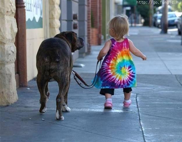 kiske's hond